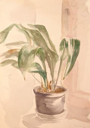 Topfpflanze 1
