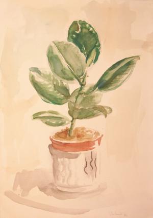 Topfpflanze 2