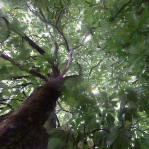 Under The Tree I