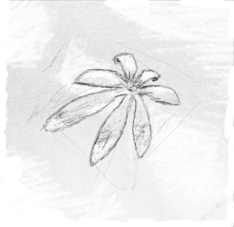 S259 Fresh Green (0) sketch