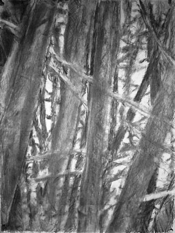 Bamboo III (1)