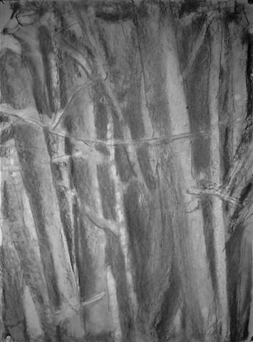 Bamboo I (1)
