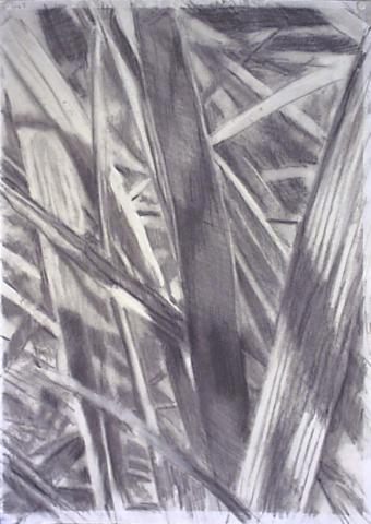 Gras I (1)